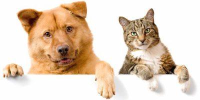 Gli animali più amici dell'uomo