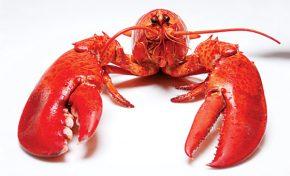 Aragosta: dove vive e cosa mangia?