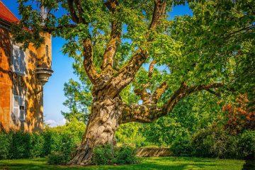 Quali alberi si possono piantare in giardino?