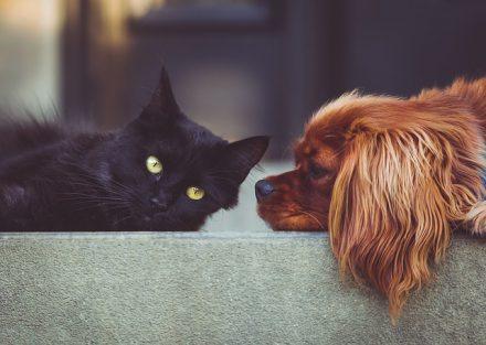 Volontariato per gli animali: perchè può essere una buona alternativa all'adozione