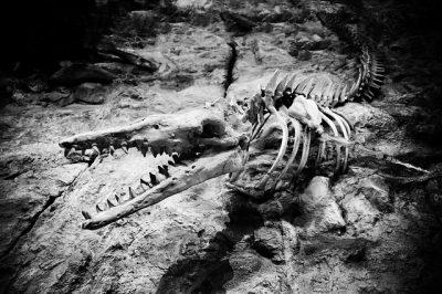 Dove si trova un gigantesco rettile fossile? Di cosa si tratta?