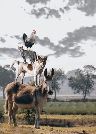 Animali con la A: quali sono e che caratteristiche hanno?
