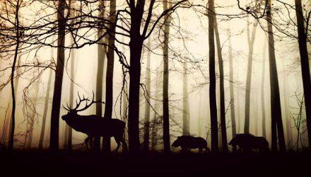 Animali con la C: ecco quali sono i più conosciuti