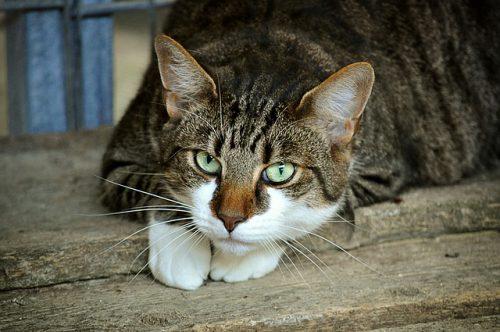 Gatti: come aiutarlo a riconoscere e gestire gli spazi in una nuova casa