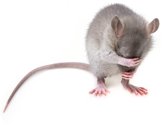 Pest Control: cos'è e a cosa serve