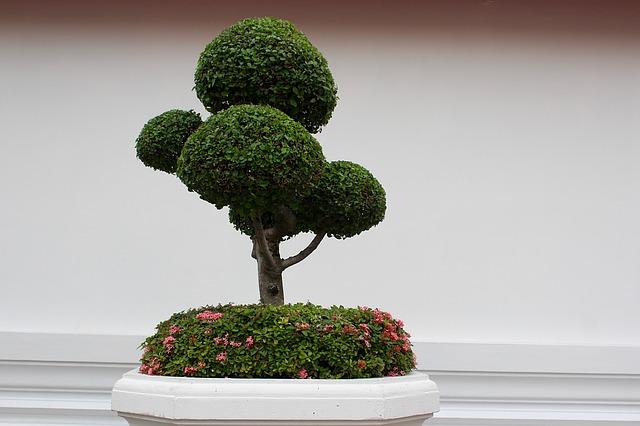 Bonsai: come scegliere le cure migliori per far crescere al meglio questa pianta