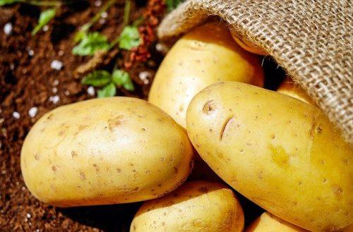 Coltivazione patate: consigli e tecniche