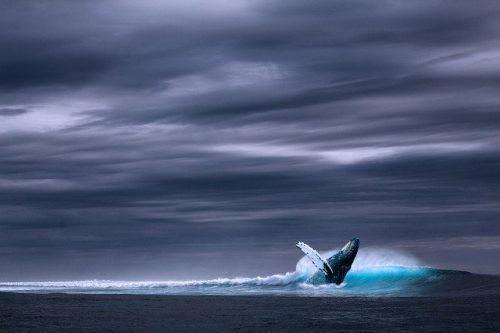I denti della balena: quanti sono? Conformazione e curiosità